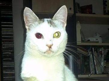 Gatto impallinato ad un occhio